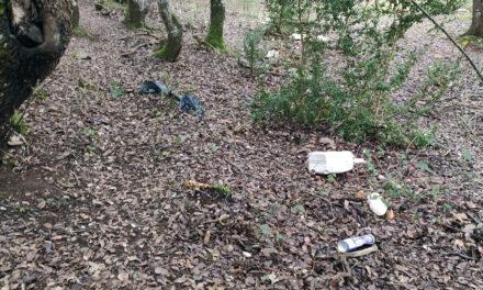 Las malas prácticas en la zona forestal del Camino Ignaciano entre Kanpezu y Genevilla