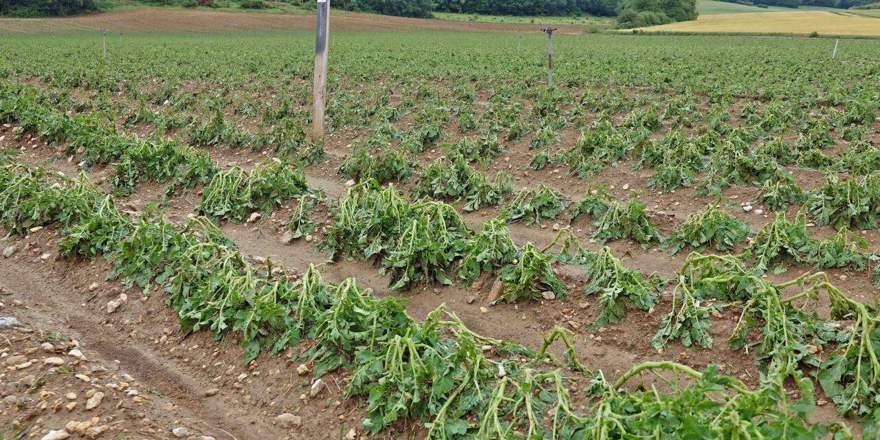 Las trombas de agua y granizo dejan daños importantes en cultivos en zonas de Montaña Alavesa